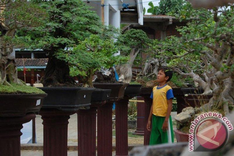 Ratusan Bonsai Dipamerkan Di Surabaya Antara News Sulawesi Tenggara