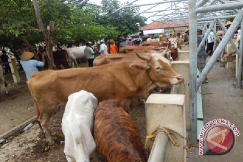 Pedagang hewan diminta tak jual hewan kurban dari Gunung Kidul