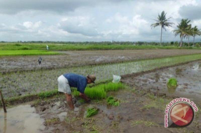 Review RTRW terganjal kawasan pertanian berkelanjutan