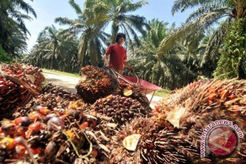 Harga sawit dan karet di Seruyan anjlok