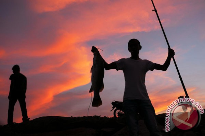 Puluhan ton ikan diterima Pelabuhan Perikanan Samudera Kutaraja-Aceh setiap hari