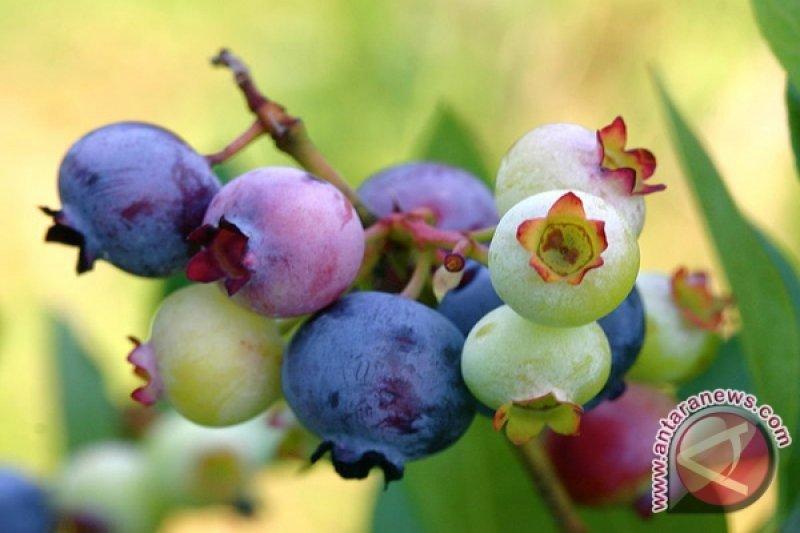 Ingin awet muda, coba buah 'mungil' ini