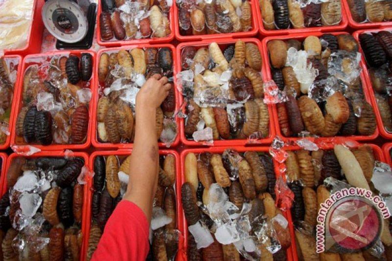 LIPI ungkap teripang jarang dikonsumsi  di Indonesia