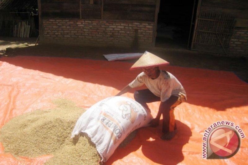 Harga padi di Lampung naik