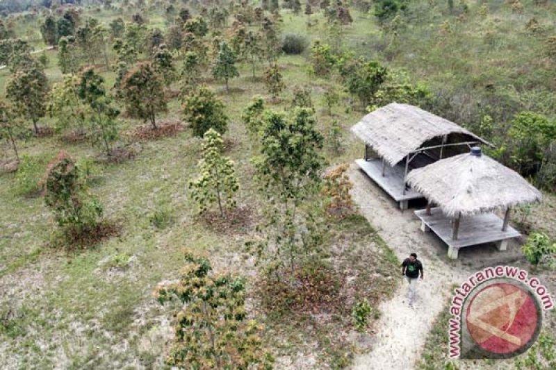 BNPB siapkan 10.000 bibit pohon tahan api
