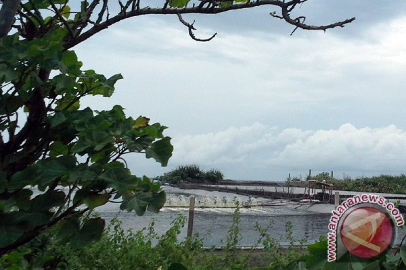 Petambak udang selatan NYIA diharapkan mengosongkan lahan
