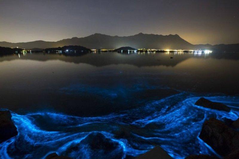 Ikan di Teluk Ambon aman dikonsumsi setelah ledakan algae