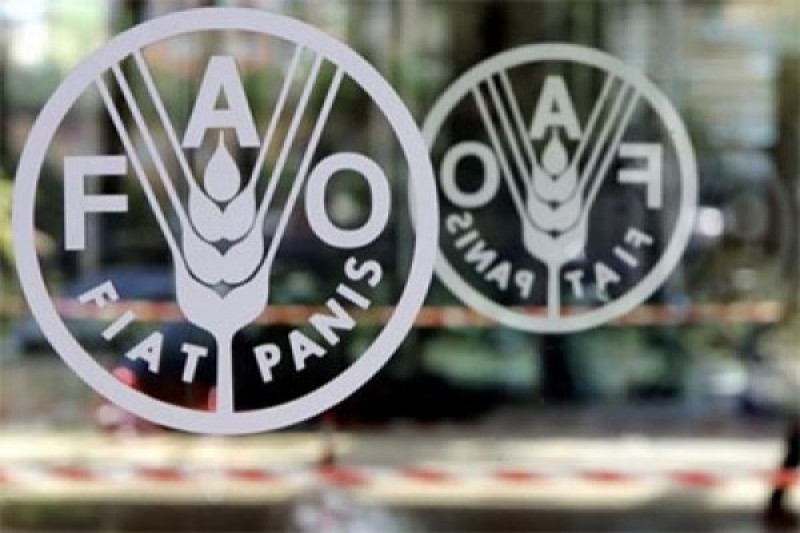 FAO umumkan pada November 2019 harga pangan dunia naik drastis