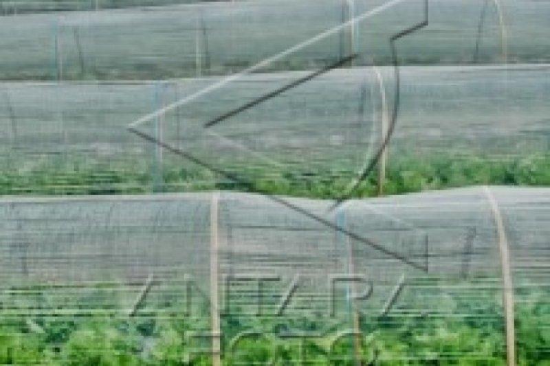 Pertanian organik dapat kurangi biaya produksi