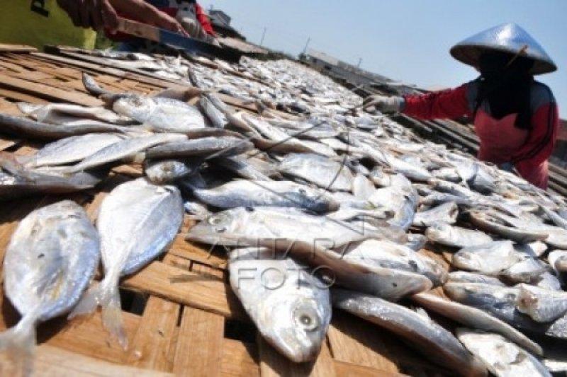 Pakar: Pemda Perlu Sosialisasikan Teknologi Olahan Ikan