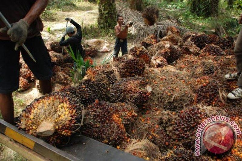 Ekspor minyak sawit Indonesia naik 13 persen