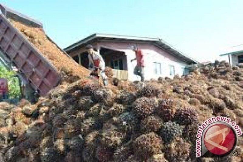 Harga  sawit Jambi turun menjadi Rp5.873 per kilogram