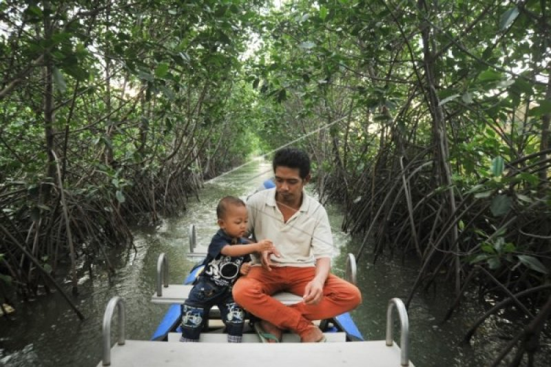 Wisata Hutan Bakau Kertomulyo Diminati Wisatawan