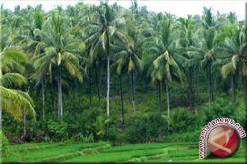 Sulteng tiap tahun lakukan peremajaan kelapa dalam