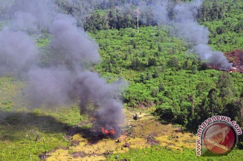 Tersangka Karhutla Riau Bertambah jadi 95 Orang