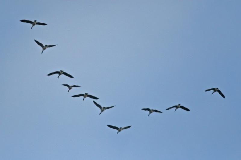 107  Gambar Burung Terbang Untuk Diwarnai  Terbaik Free