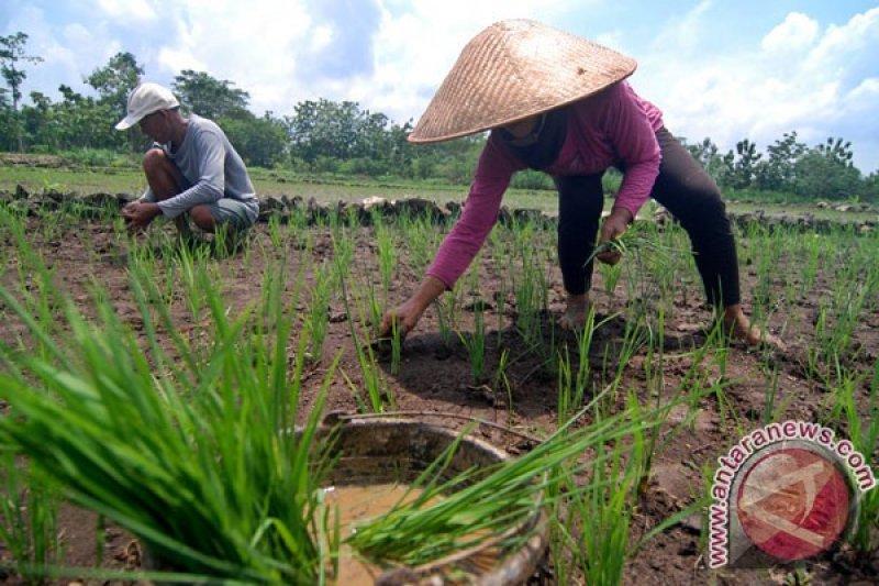 Petani Gunung Kidul diimbau tak terkecoh hujan yang turun