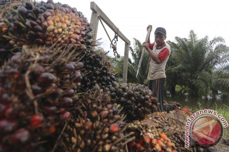 Musi Banyuasin gagas berdirinya SMK kelapa sawit