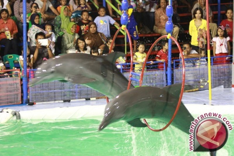 Koalisi penyelamat satwa protes sirkus lumba-lumba