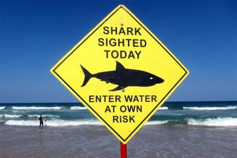 Peselancar diserang hiu di pantai Australia