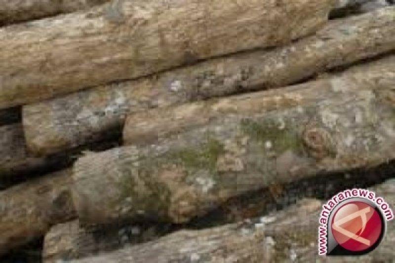 UPP-Kehutanan pastikan kayu miliki dokumen lengkap