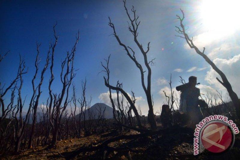Jumlah pendaki Gunung Lawu berangsur normal