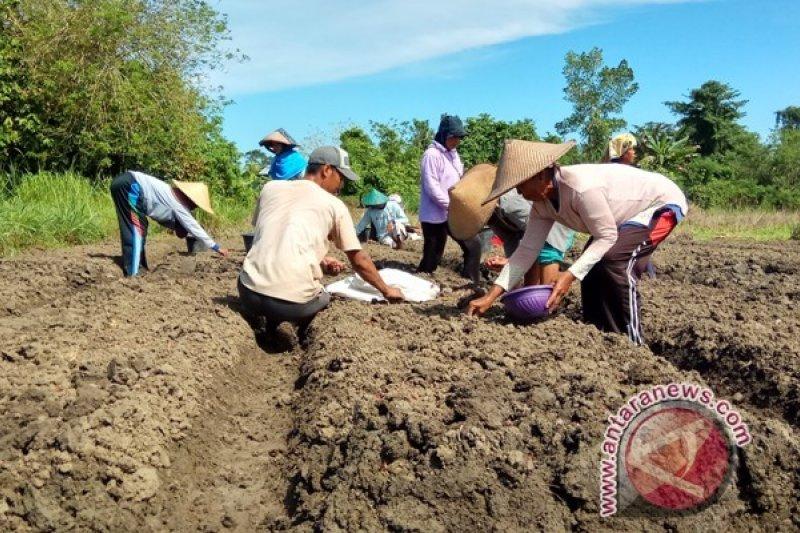 Pemkab Keerom dorong tingkatkan produksi bawang merah