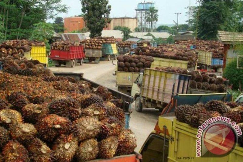 Harga sawit di Bengkulu naik lagi