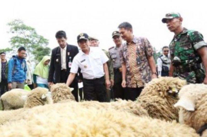 Populasi domba Batur terus ditingkatkan