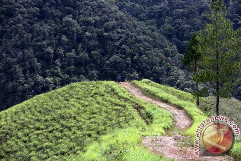Siasat petani mencari tanaman ekonomis