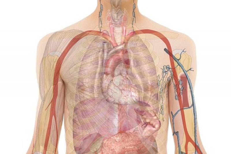 Lebih dari satu juta warga China terdaftar sebagai donor organ
