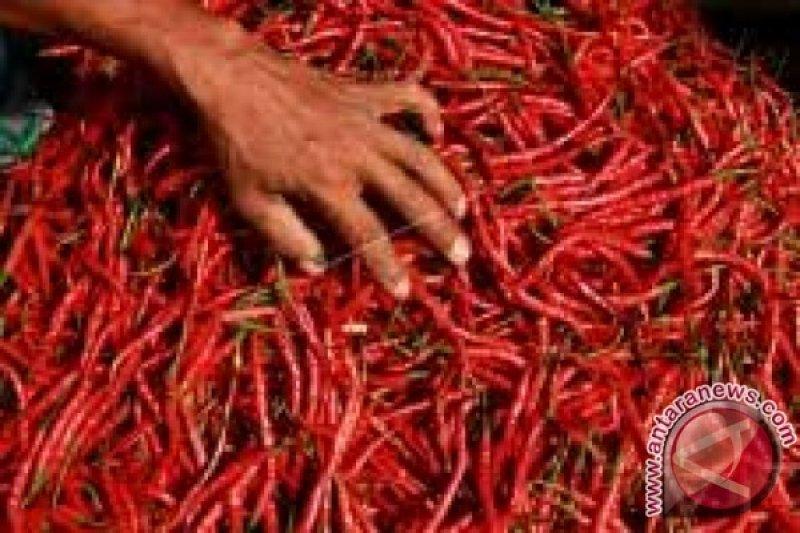 Harga cabai merah di Kendari tembus Rp70 ribu per kg