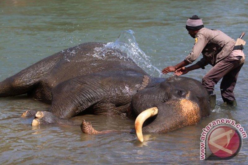 Dilema gajah dan manusia (2)