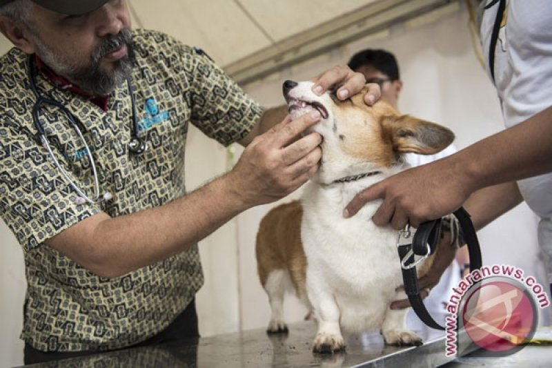 Mengenali dan menghindari rabies