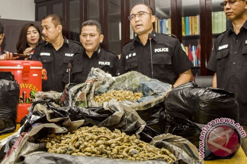 BNNP Bali cegah peredaran narkotika jenis