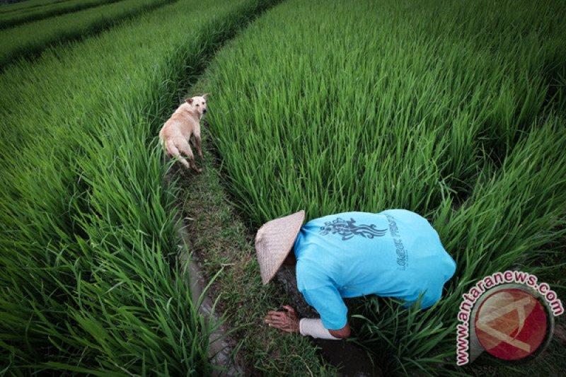 Komisi pastikan irigasi di Kalibawang mengalir Agustus