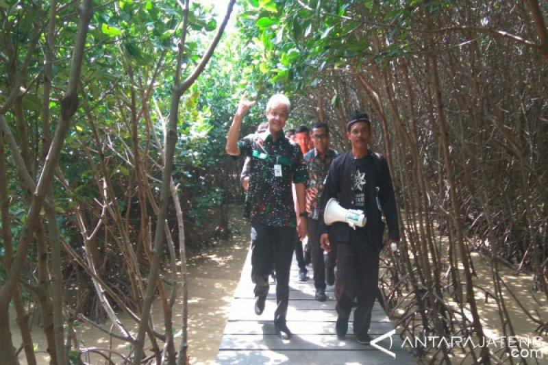 Wisata hutan mangrove Brebes harus digarap serius