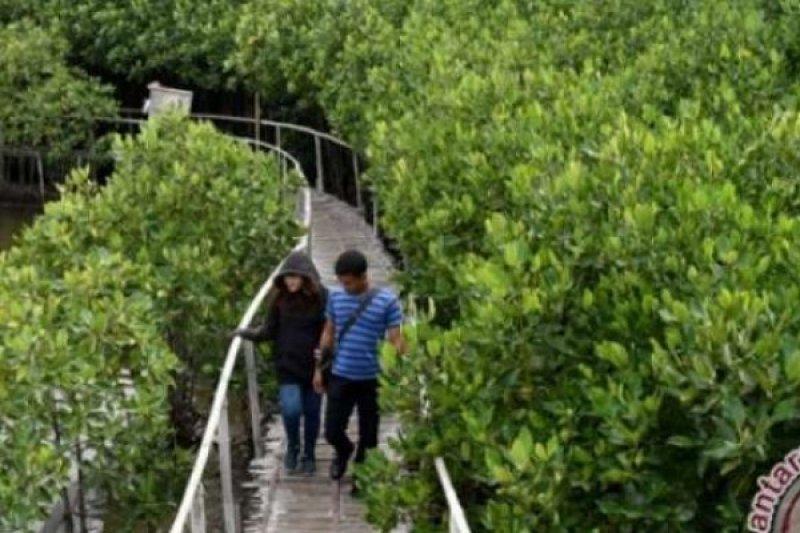 Dukung Kunjungan Wisatawan, Pariaman Bangun Jalur Penelusuran Wisata Mangrove
