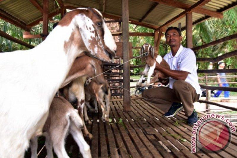 Baznas OKU salurkan bantuan  hewan ternak