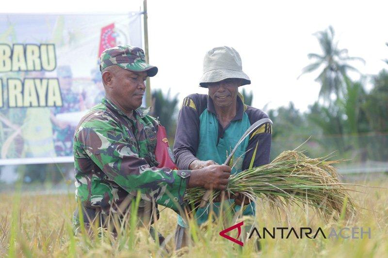 Babinsa Musirawas bantu petani panen padi