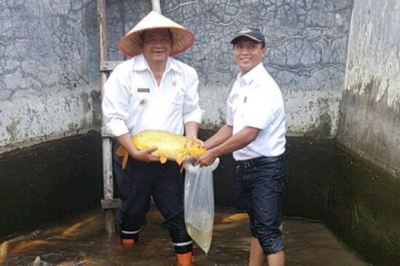 Teknologi dome LIPI naikkan 5.722 persen benih ikan Technopark Samosir