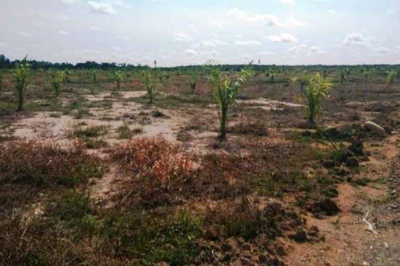 Penyelesaian sengketa lahan sawit harus jadi prioritas pemerintah