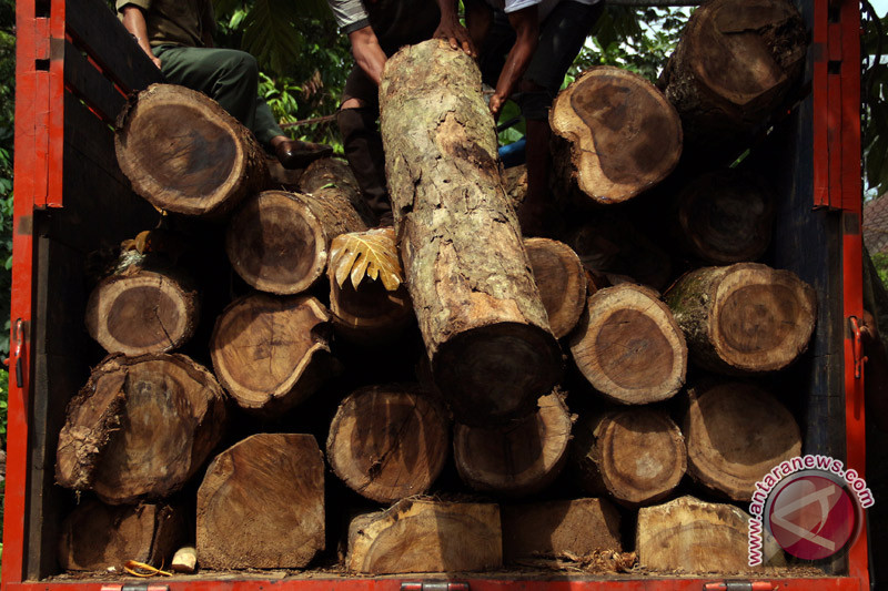 Polisi sita ratusan batang kayu meranti di Solok