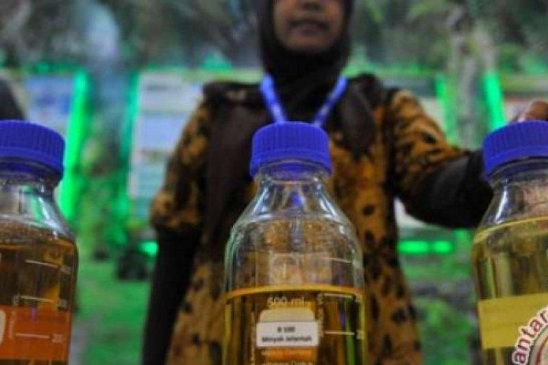 Harga BBM dari Minyak Sawit Biodiesel juga Naik, Akibat dari Faktor ini
