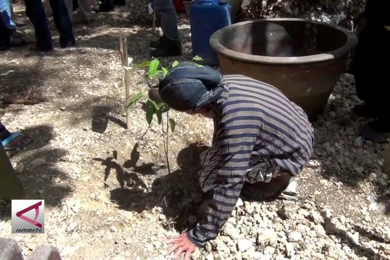 Penanaman pohon Gaharu simbol kelestarian alam dan keutuhan pancasila