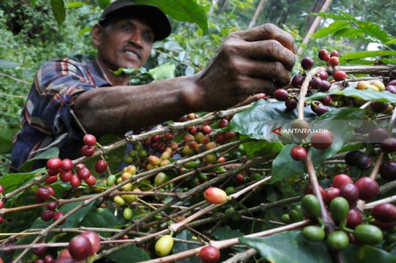 Polres Temanggung buru perusak ratusan tanaman kopi