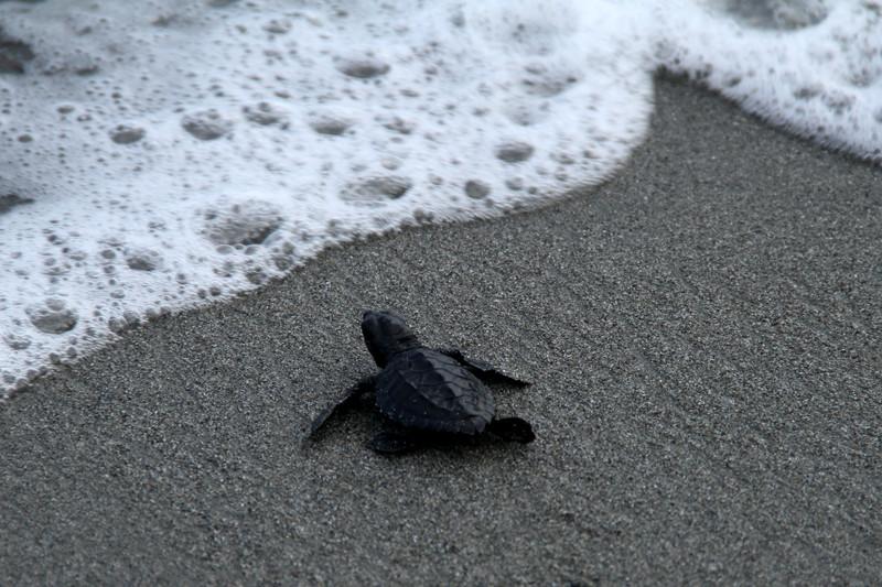 Polres Majene kawal tukik ke laut