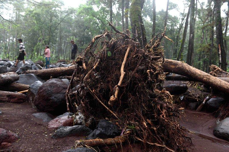 Pohon tumbang sebabkan dua bangunan di Pamekasan rusak