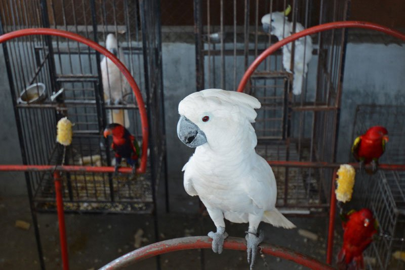 Sita burung dilindungi