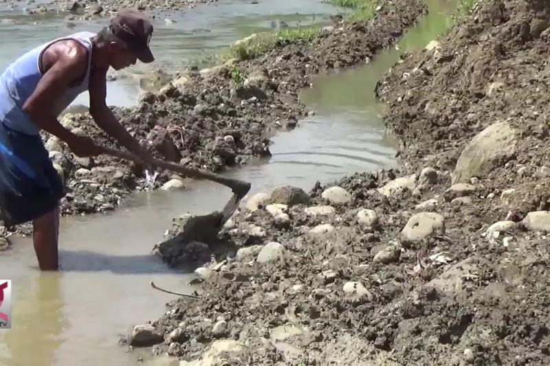 Petani Bendung Sungai untuk mengairi sawah